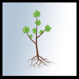 date plantation vigne racines nues