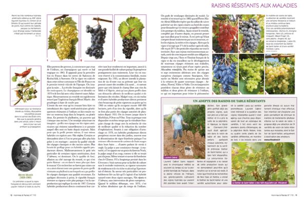 Revue homme et plantes vigne